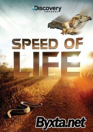 Discovery: Скорость жизни (3 серии из 3) / Speed of Life (2010) BDRip