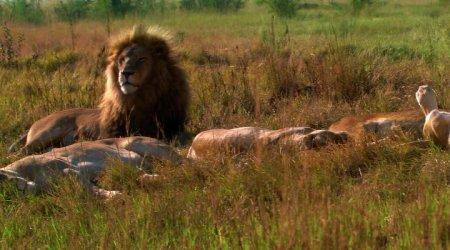 Белый лев / White Lion [2010 / DVDRip]