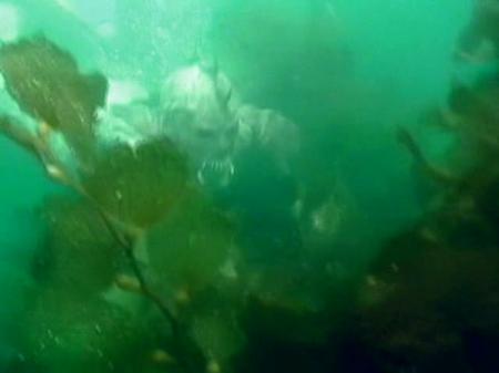 Акваноиды / Aquanoids [2003 / DVDRip]